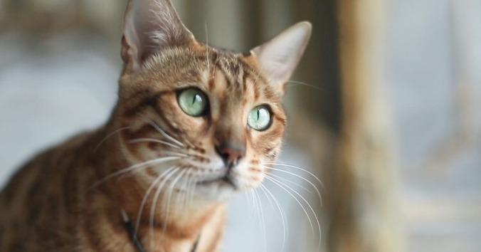 cat-person-cat.w1200.h630